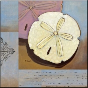 PB-Sanddollar Collage - Accent Tile