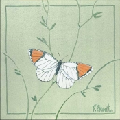 PB-Orange Tip Butterfly    - Tile Mural