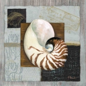 PB-Westport Nautilus - Accent Tile