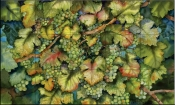 Chardonnay Grapes   - Tile Mural