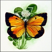 Sleepy Orange Butterfly on Clover    - Tile Mural