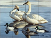 Swans and Goldeneyes - CF - Tile Mural