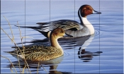 Pintail Pair II - CF - Tile Mural