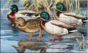 Early Ice Mallards - CF - Tile Mural