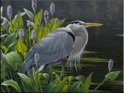 Biding Time Great Blue Heron - WG - Tile Mural