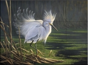 Cattle Egret -WG - Tile Mural