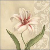 Cream Lily - DL - Accent Tile