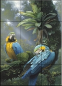 Blue and Yellow Macaws    - Tile Mural