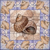 Seashell Square 7-DF - Tile Mural