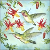 RS - Calliopes Hummingbirds - Accent Tile