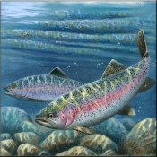 Rainbow Trout - CF - Accent Tile