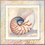 Bordered Shell Nautilus - Accent Tile