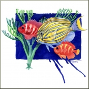 PB-Clown Surgeon Fish - Accent Tile