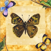 Buckeye Butterfly with Background    - Tile Mural