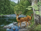 Streamside-White Tail Deer-WV - Tile Mural