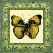 Butterfly Square 1 - DF - Accent Tile