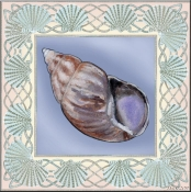 Seashell Square 2 - DF - Accent Tile
