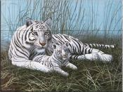 White Tigers and Cubs - MM - Tile Mural