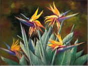 Birds of Paradise  - LSH - Tile Mural