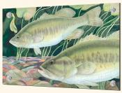 Largemouth Bass - Splashback Mural