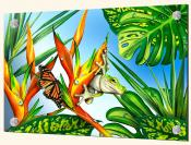 Frog and Butterfly - Splashback Mural