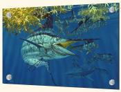 Blue Marlin in Sargussum-DR - Splashback Mural