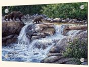 Entiat Falls-Grizzly Family-JT - Splashback Mural