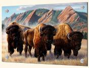 Bison Under The Flatirons-CF - Solo Tile