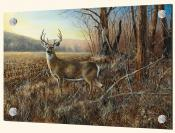 Bluff Country Buck-JH - Solo Tile