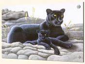 Black Panther and Cub - MM - Splashback Mural