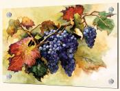 Grapes Ready for the Harvest - ED - Splashback Mural