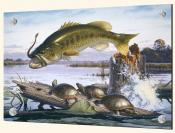 Largemouth Bass And Turtles - Splashback Mural