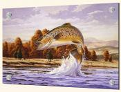 Brown Trout - Splashback Mural