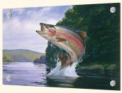 Rainbow Trout - Splashback Mural